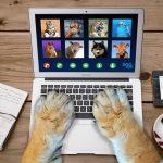 Le spam s'exécute sur FaceTime: pourquoi les utilisateurs Apple passent des nuits blanches